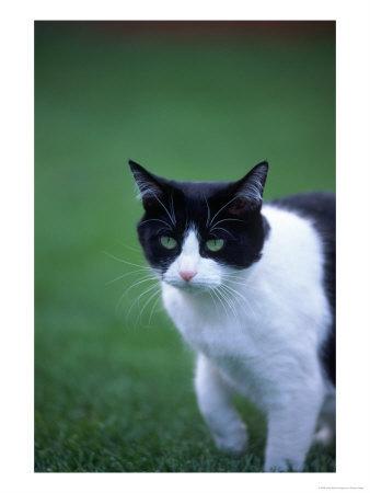 Black And White Cat Pics^@#