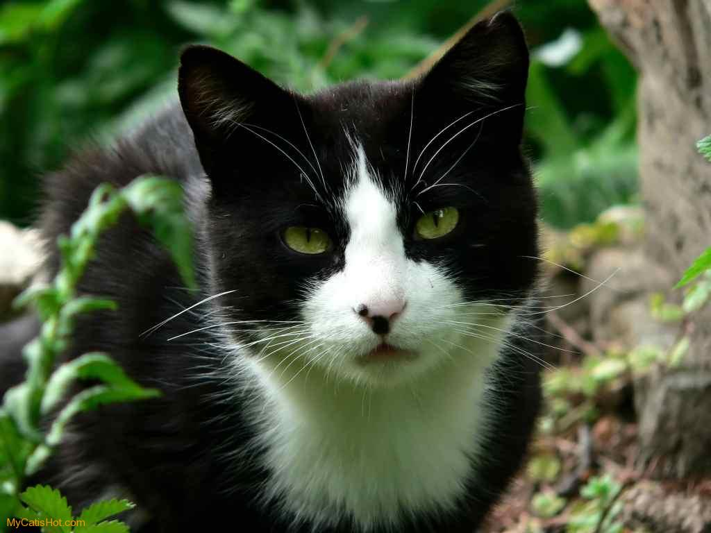 Moongazer- A Black and White she-cat with a kind heart ...